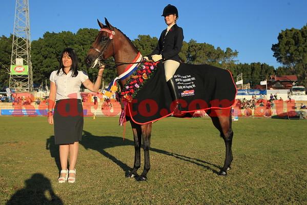 2014 09 30 Perth Royal Show Thoroughbred Ridden