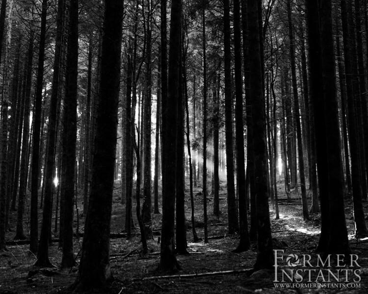 Black & White Forest Crepuscular