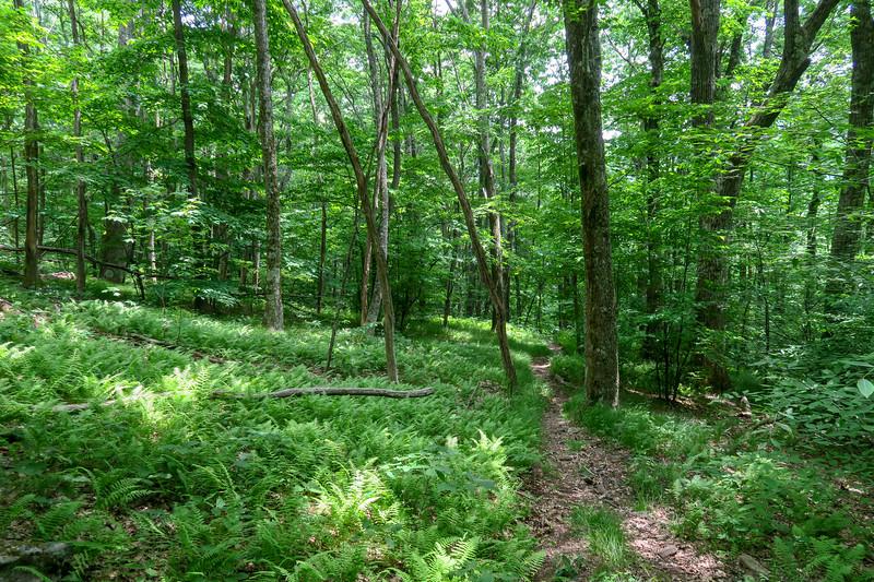 Greasy Cove Trail -- 4,900'
