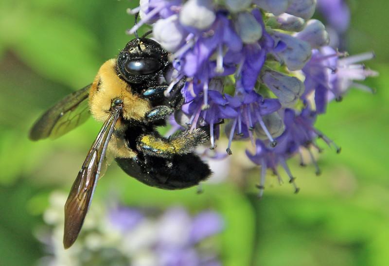Bumble bee 23