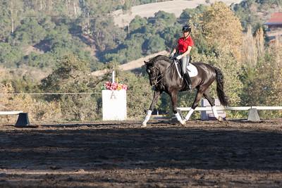 Black horse w star