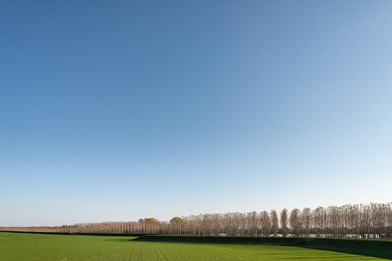 Poplars - Bagnolo San Vito, Mantova, Italy - November 18, 2018