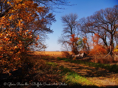 Old Driveway and corn field