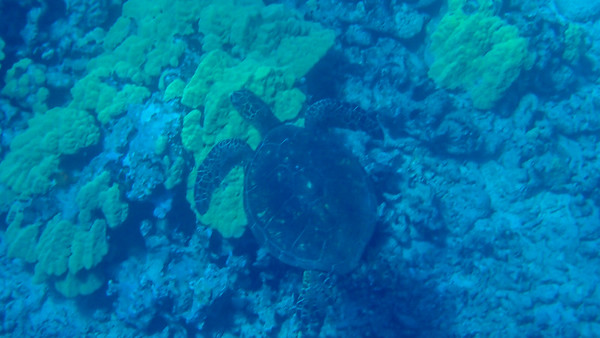 Day 8: Snorkeling At Wailea Point, South Side Of The Island, and Molokini