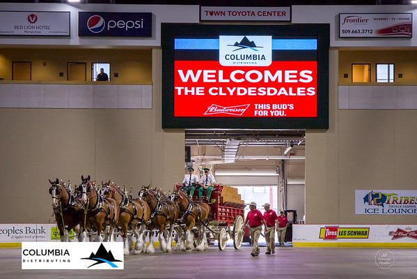 Columbia Distributing Clydesdale Horses 5.25.2016