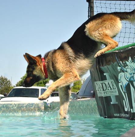 Dog Sports Expo Fun Jump 2012 Day 2