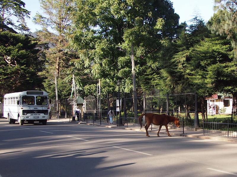 P2168555-urban-horse.JPG