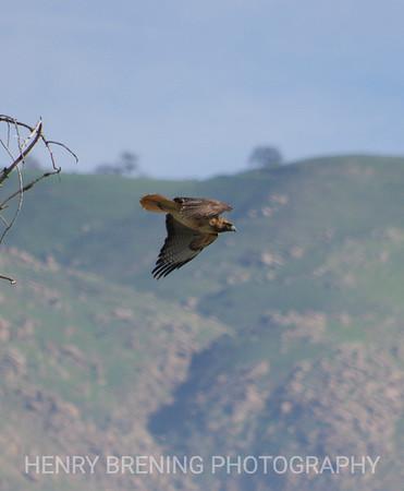 Birds In Flight (BIF)