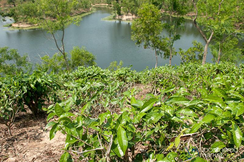 Madhabpur Lake - Bangladesh