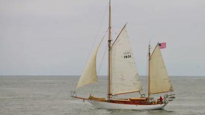 Blue Whales Harbor Breeze 7282013