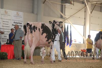 Big E Holstein Senior Cows 16