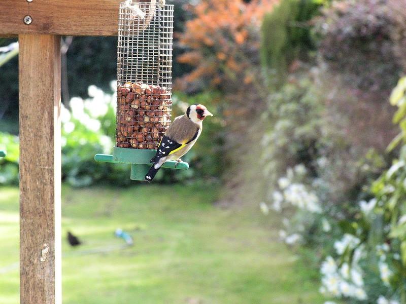 Birds_in_Kilkenny.jpg