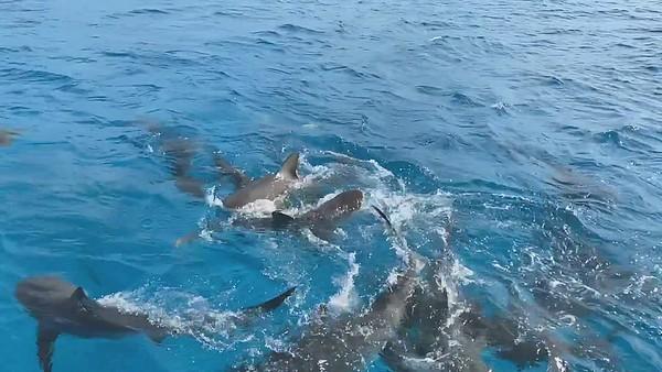 video shearwater