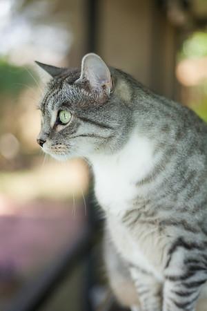 Kitties Collection