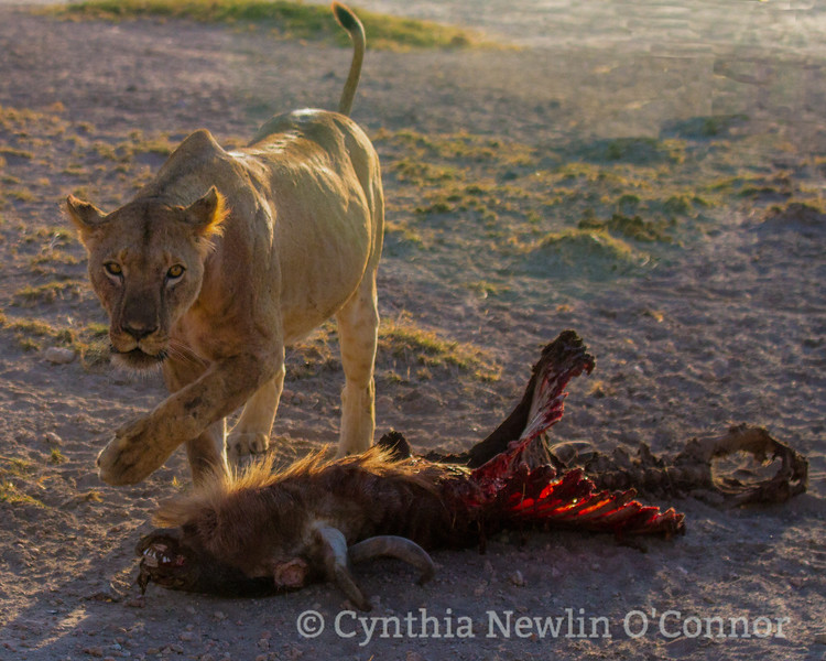 cat fight and more - 17.jpg