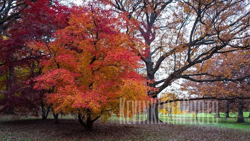 arboretum-oct2018-07.jpg