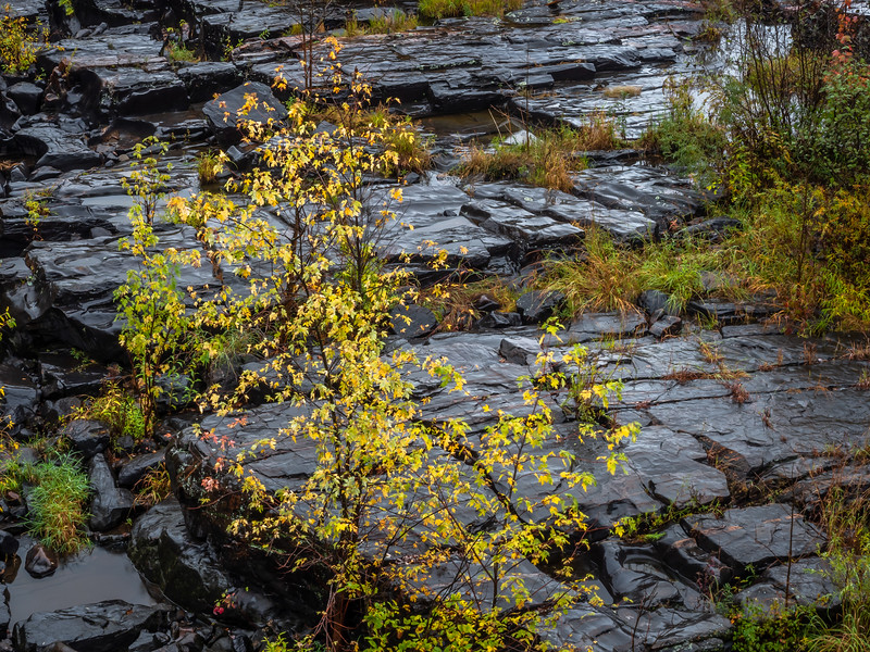 Autumn colored leaves shine against a background of wet bedrock near Jim Falls, Wisconsin.