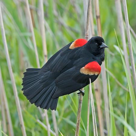 VA is for Bird Lovers