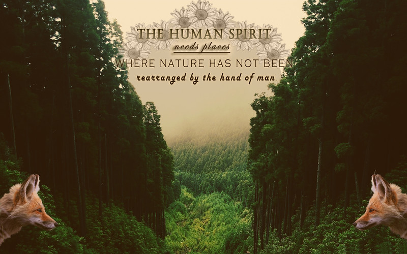 forestfox.jpg