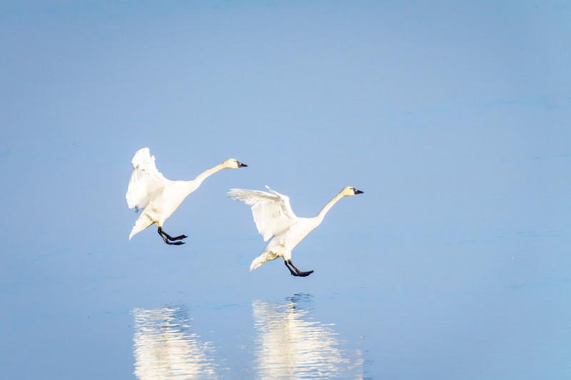 landing reflection-Edit
