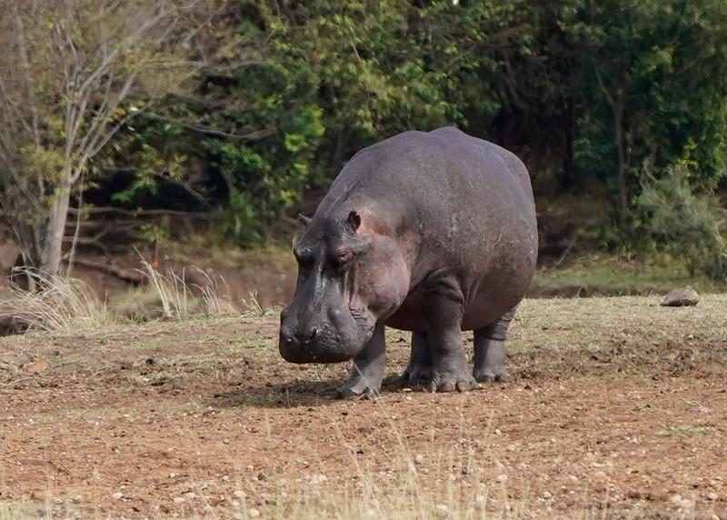 safari-2018-106.jpg