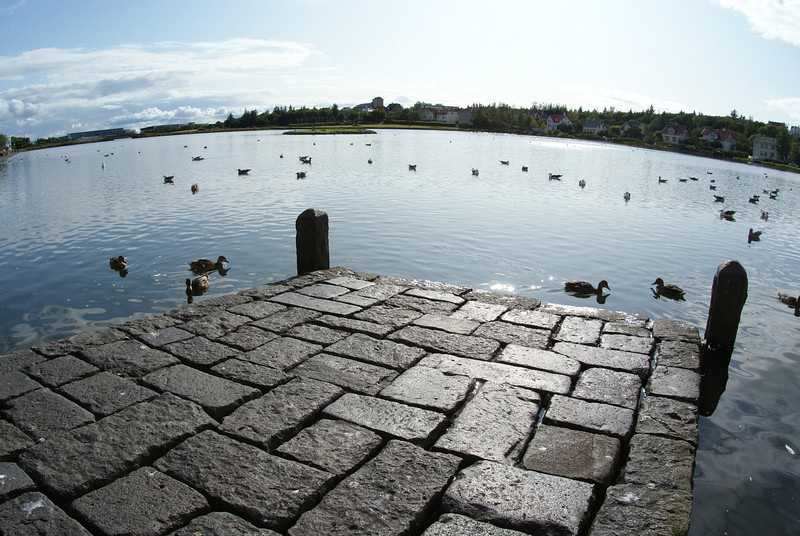 In Reykjavik next to City Hall.  Those are ducks.  I adore ducks.