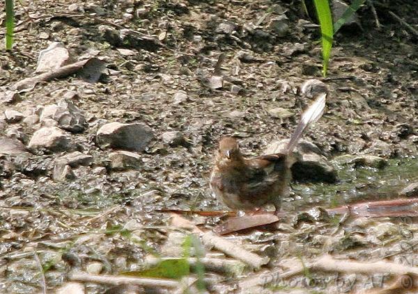 2006-09-09 Busch Wildlife Consv Area