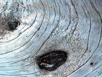 Natural Art - Wood