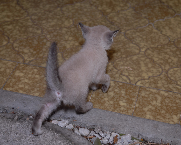2007 04 12 - New Kitty 024.JPG