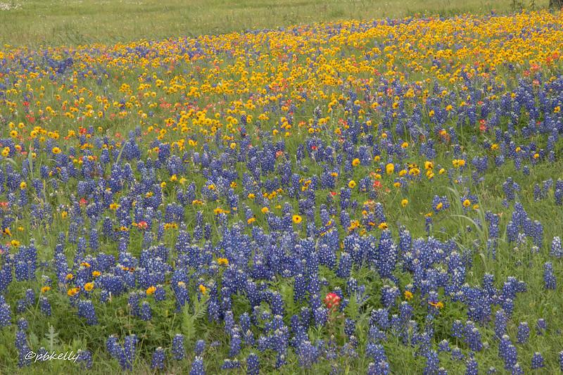 flowers 040618-2.jpg