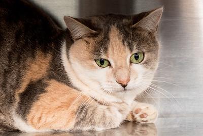 Animals 11-24-2016 cats