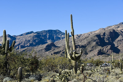 Sabino National Forest
