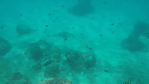Day 1 - Snorkeling
