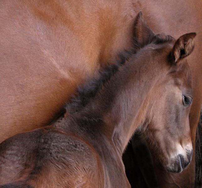 Rhodes foal cropped.JPG