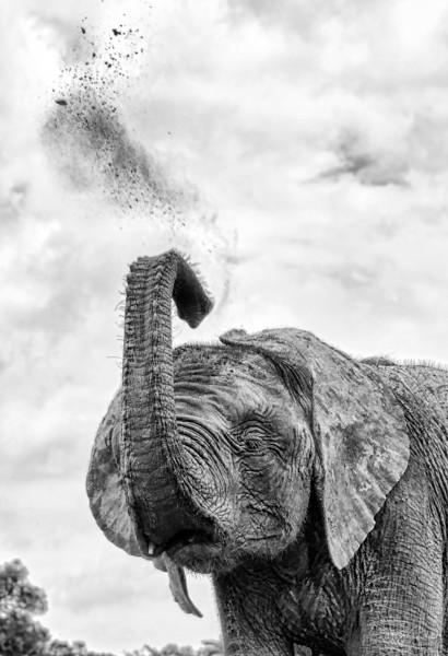 Aug312013_nairobi_blixen_elephant_2420.jpg