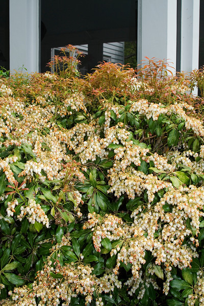 Bushes by the porch.jpg
