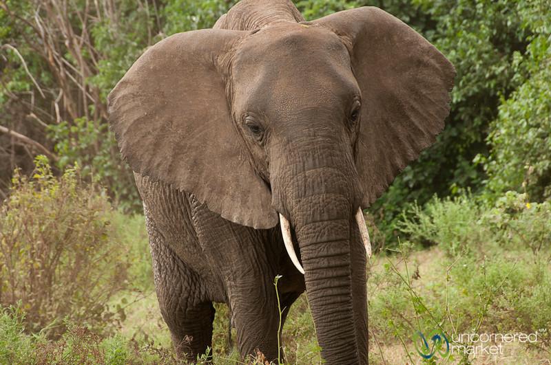 Elephant Face - Lake Manyara, Tanzania