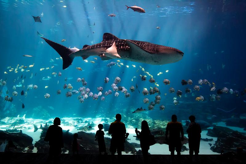 Aquarium 211.jpg