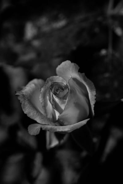 Balboa Park Rose Garden-0851-2.jpg
