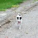 farley pups 006-2.jpg