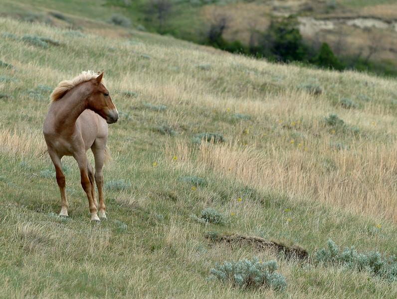 horses9.jpg