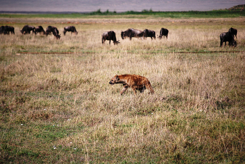 Ngorongoro (37).JPG