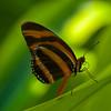 Butterfly in Green