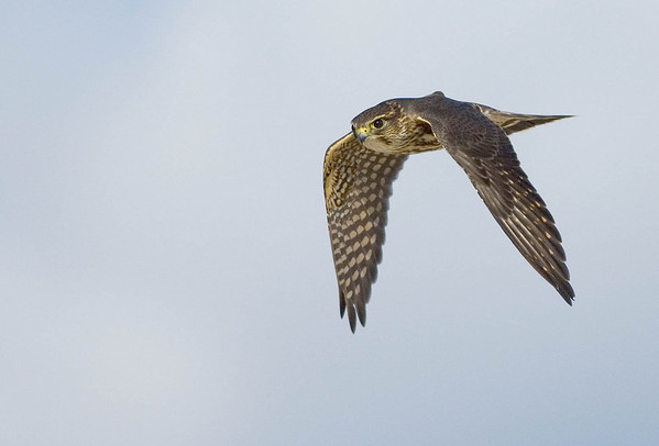 Hawks and other images from Autumn / Winter