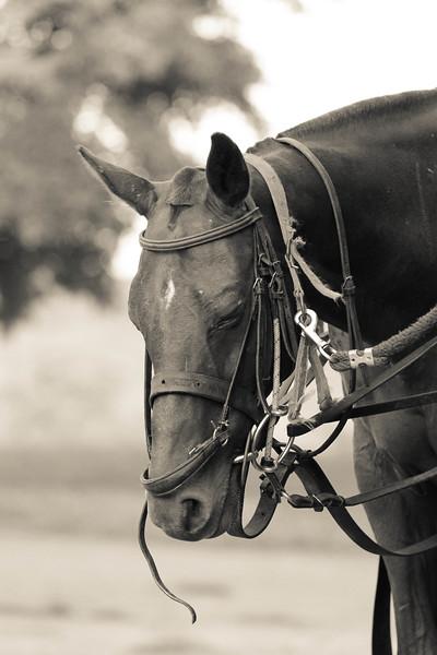 horse resting.jpg