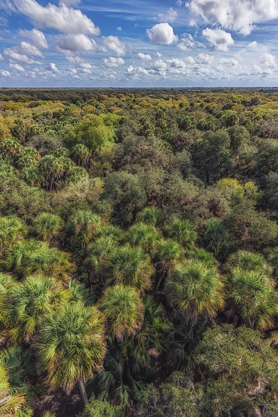 Above the trees at Myakka