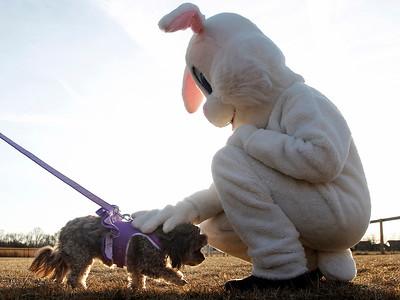 20150401 - Dog Egg Hunt