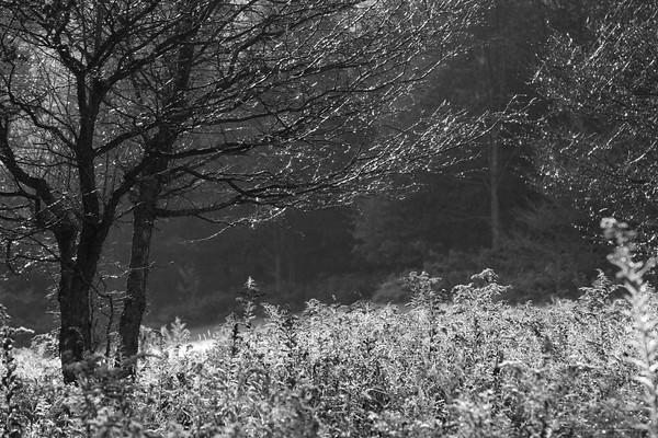 IMG_5958©2010 Nature's Art_1