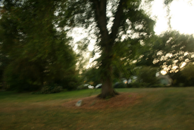 Bad picture, but this is a Seattle heritage tree. Apparently there are several trees marked that way with a plaque.