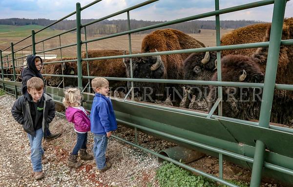 Bison farm - 12-20-20 - Messenger-Inquirer